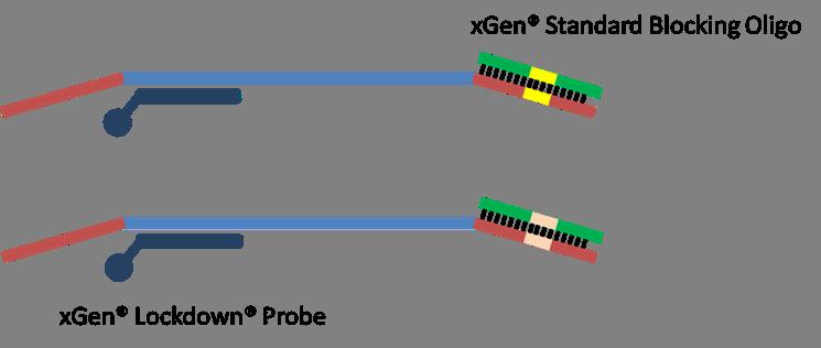 q417-ngs-oligos-fig3