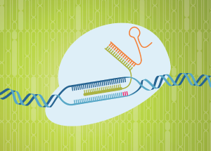 CRISPR editing events: rhAmpSeq applications