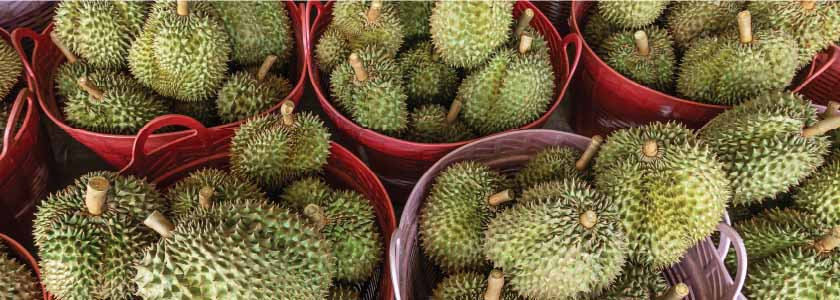 What makes the durian smell so bad? hero image