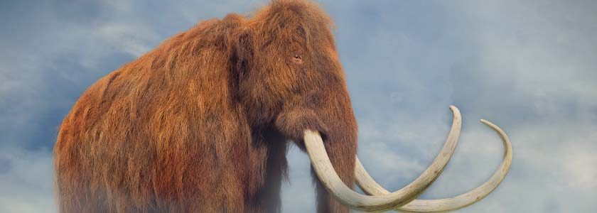 Dr. George Church's Woolly Mammoth Project  hero image