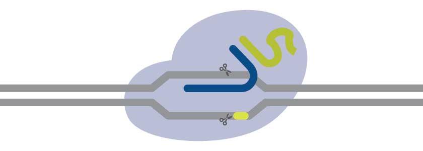 New advances for CRISPR-Cas9 tools hero image
