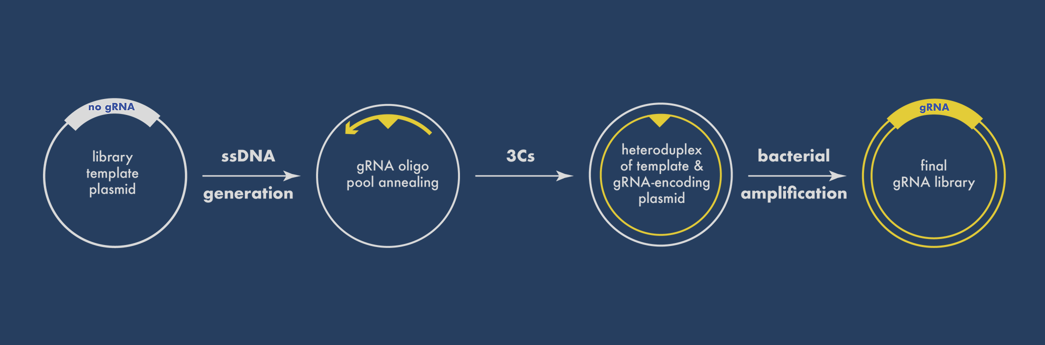 3Cs CRISPR screening preparation with pooled DNA oligos