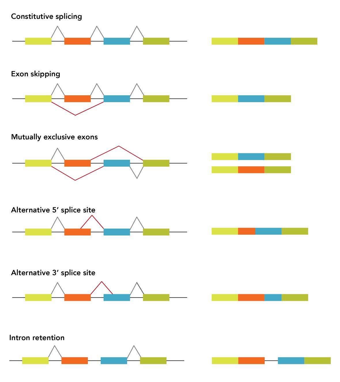 alternative_splicing_v1