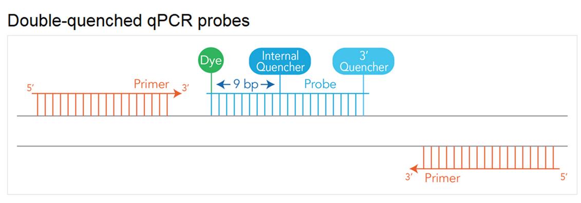 art177-LT-PCR-Converting Probes-Fig1