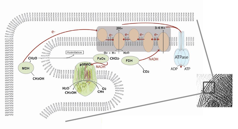 art81-YR-Tavormina-Fig4