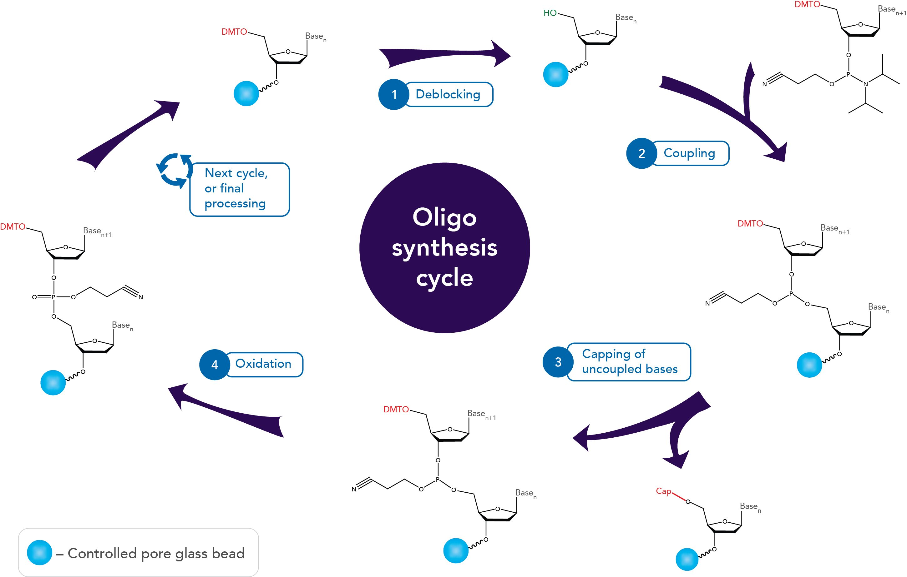 Phosphoramidite oligo synthesis