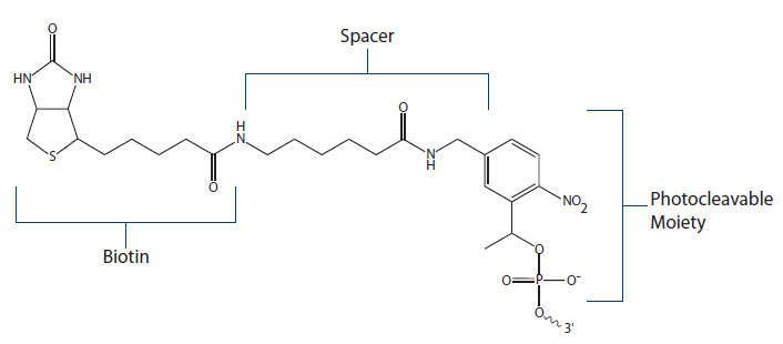 Biotin Fig 5