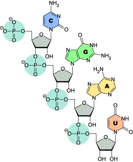 CC_2PrimeHydroxyl