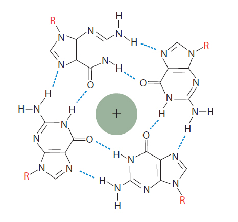 D-OLI13CC-Grepeats-F2