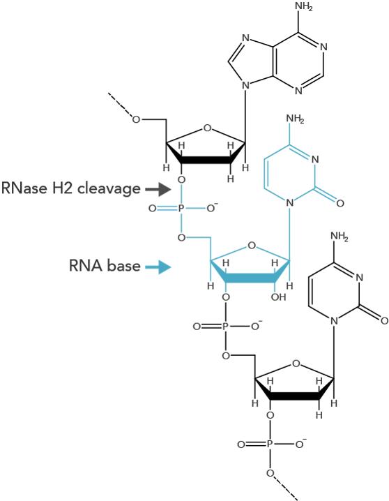 d-pcr17cc-rhampgenotyping-f1