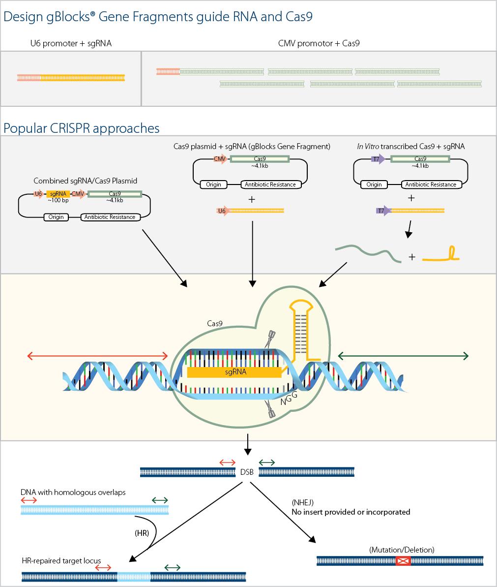 D4.1-CC-CRISPR_Fig1