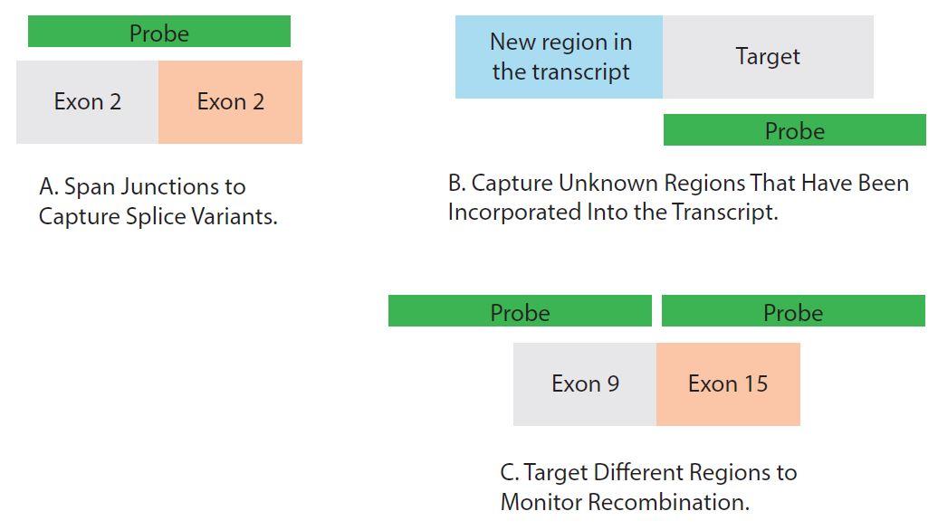 D4.1-CC-Target enrichment_Fig 4