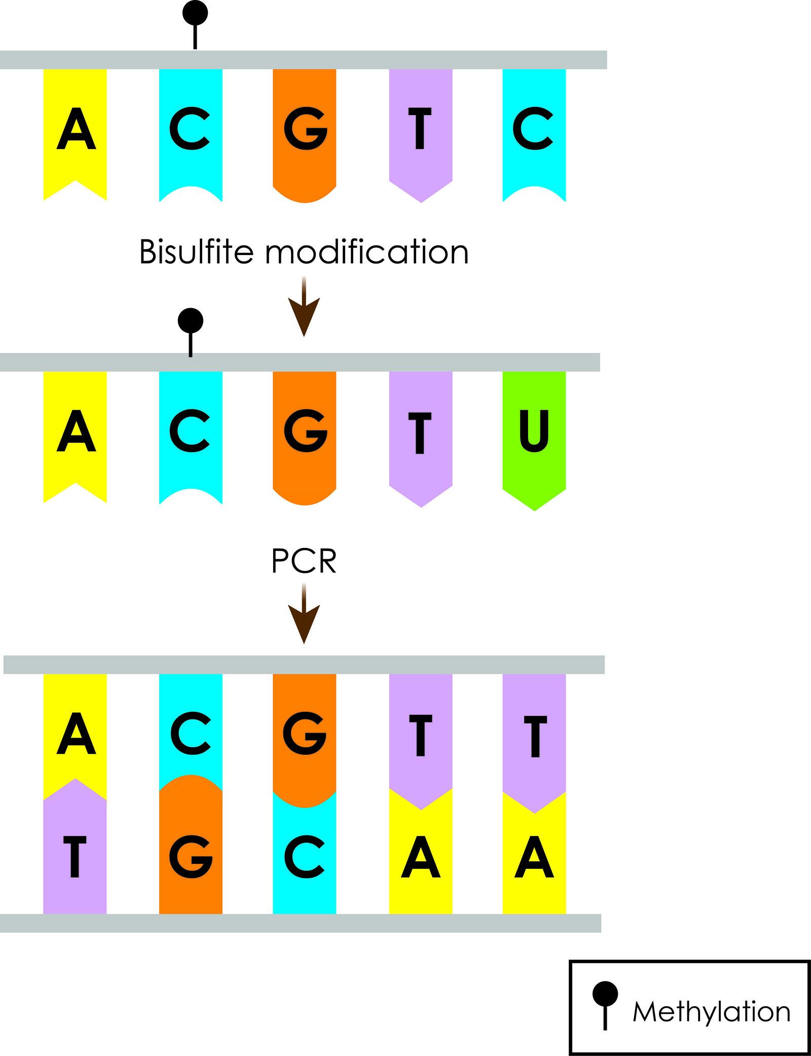 D4.1-YR-Prostate cancer_Fig3