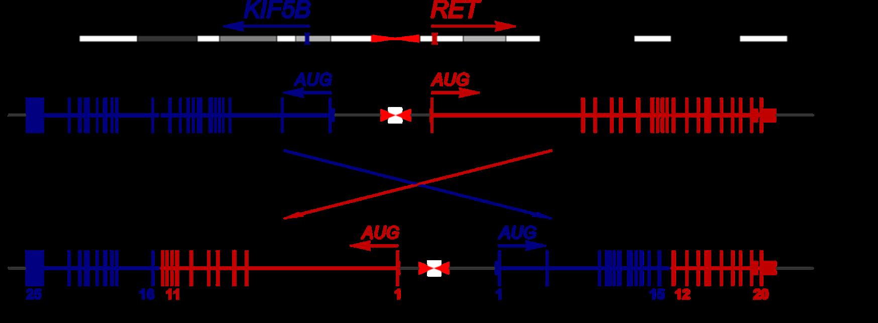 Fig-5-art19-YR-FoundationOne