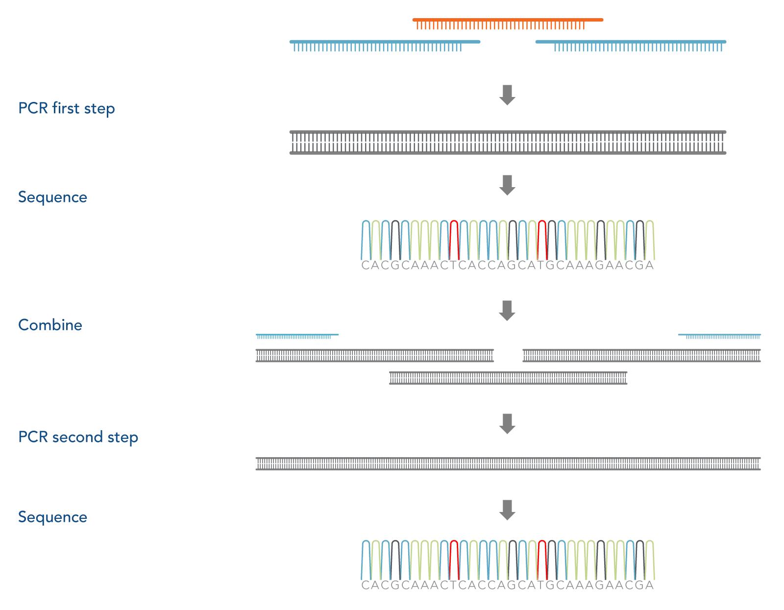 PCR Assembly 2