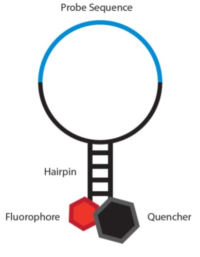 YR - Molecular Beacons_Fig 1