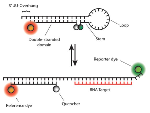 YR - Molecular Beacons_Fig 2