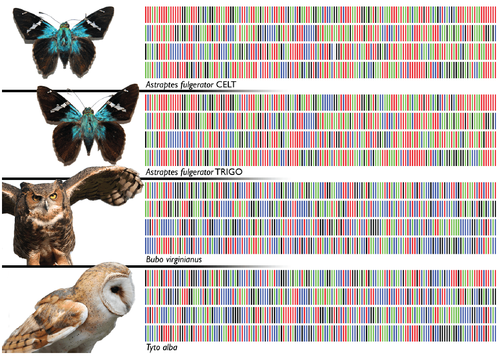 YR_Barcodes for life_Fig 1