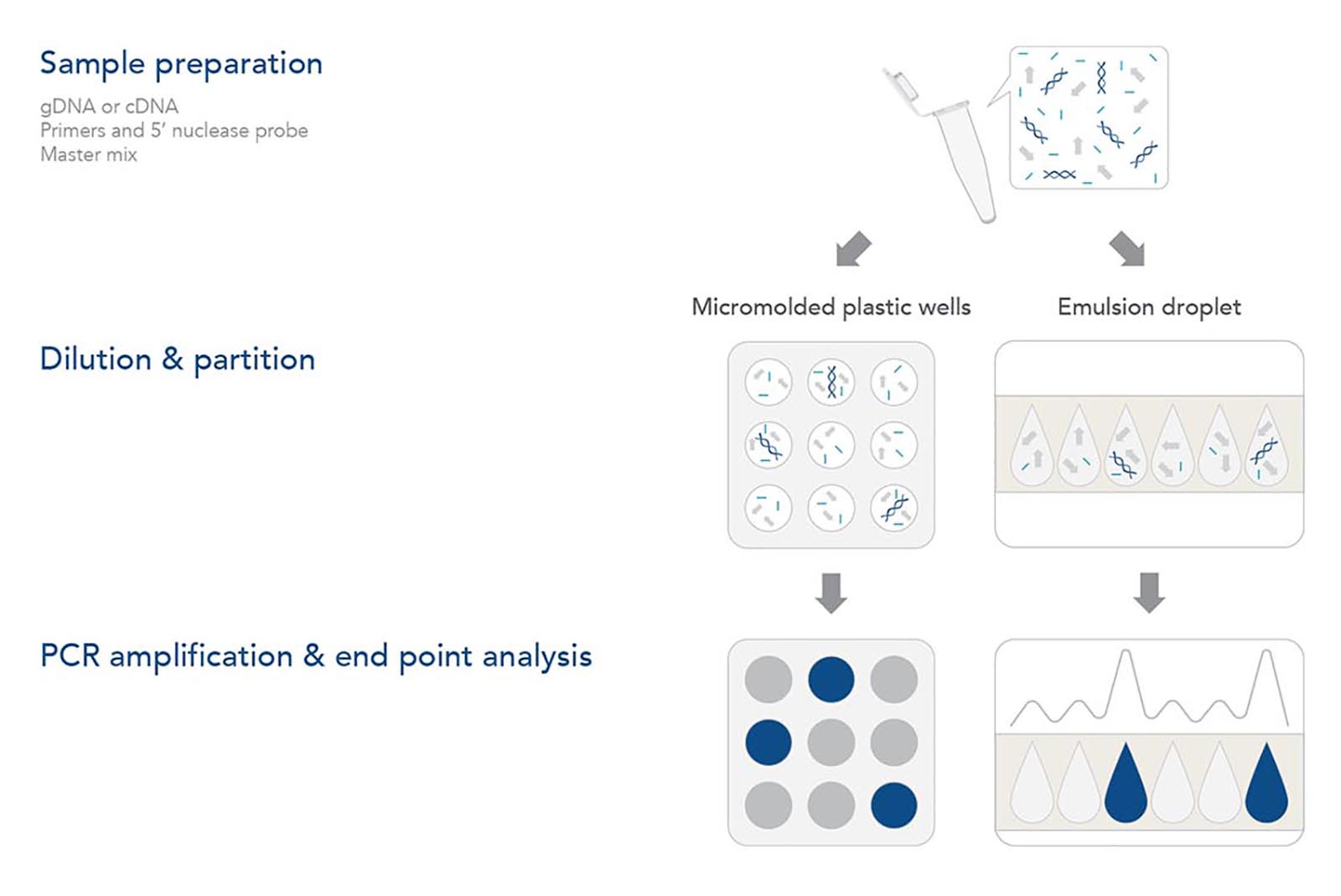 Basic steps in a digital PCR workflow for highly sensitive quantification.
