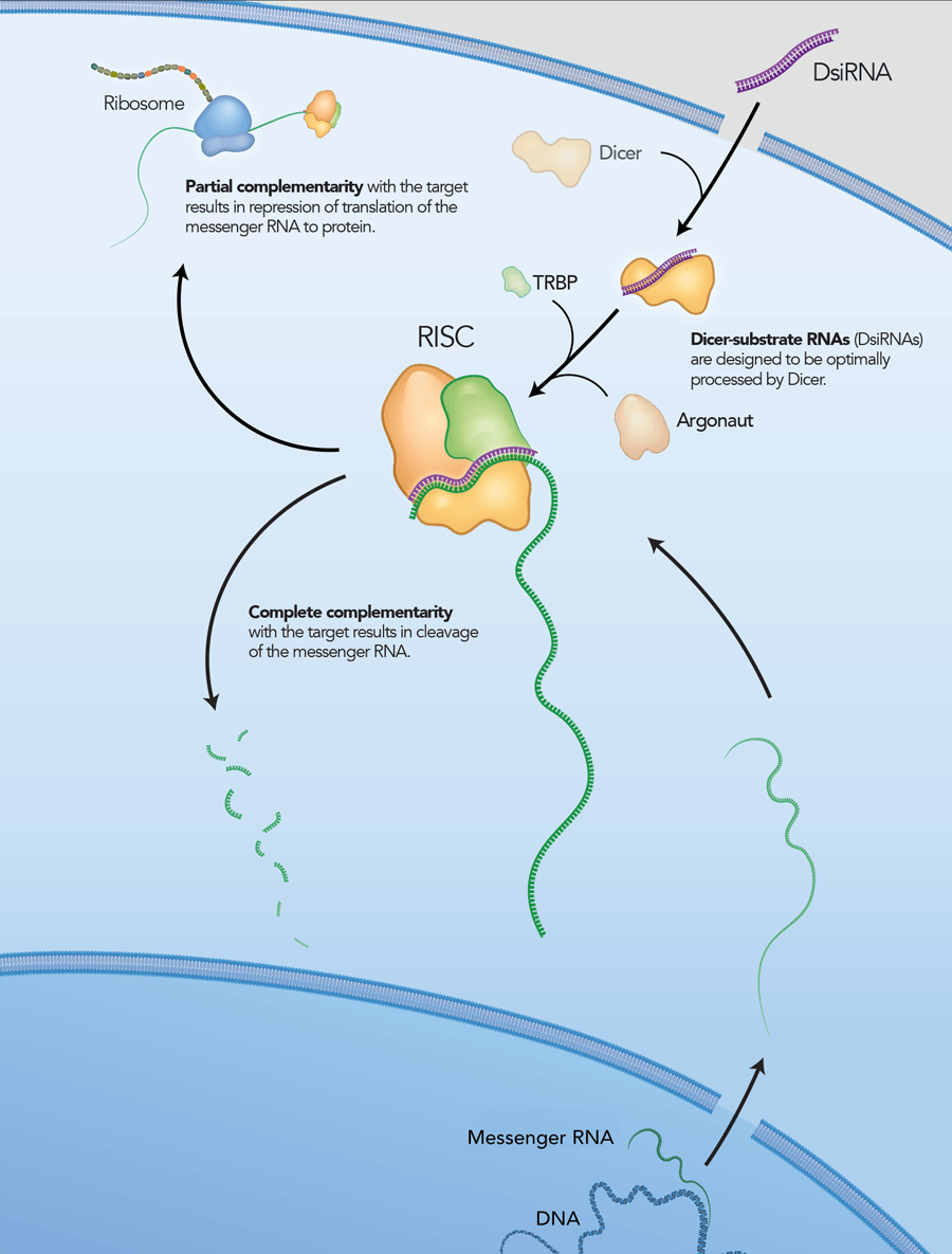 Pebp1 Wardens Ferroptosis By Enabling Lipoxygenase Generation Of