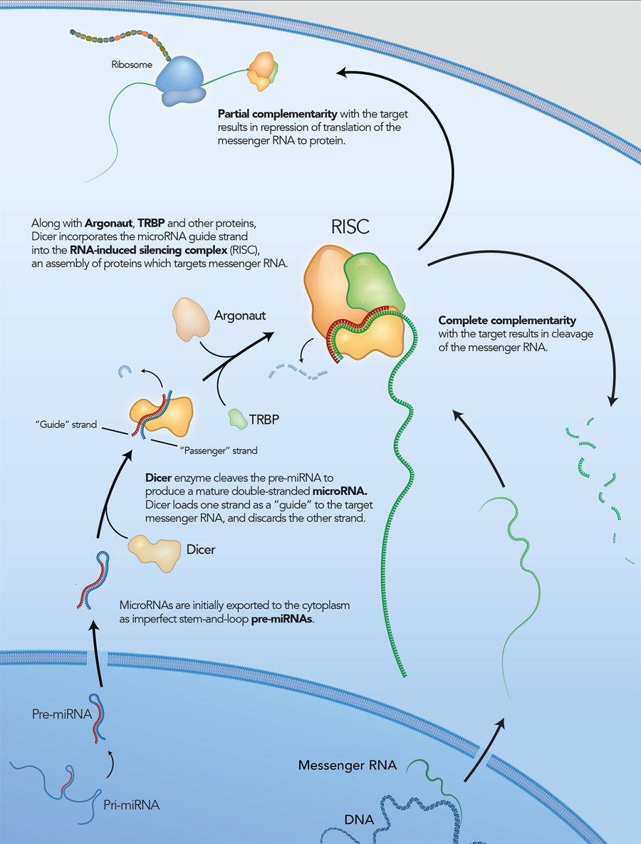 rnai-overview