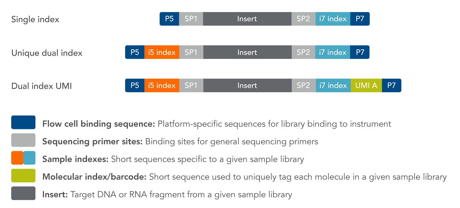 Options for sequencing adapters with molecular barcodes.