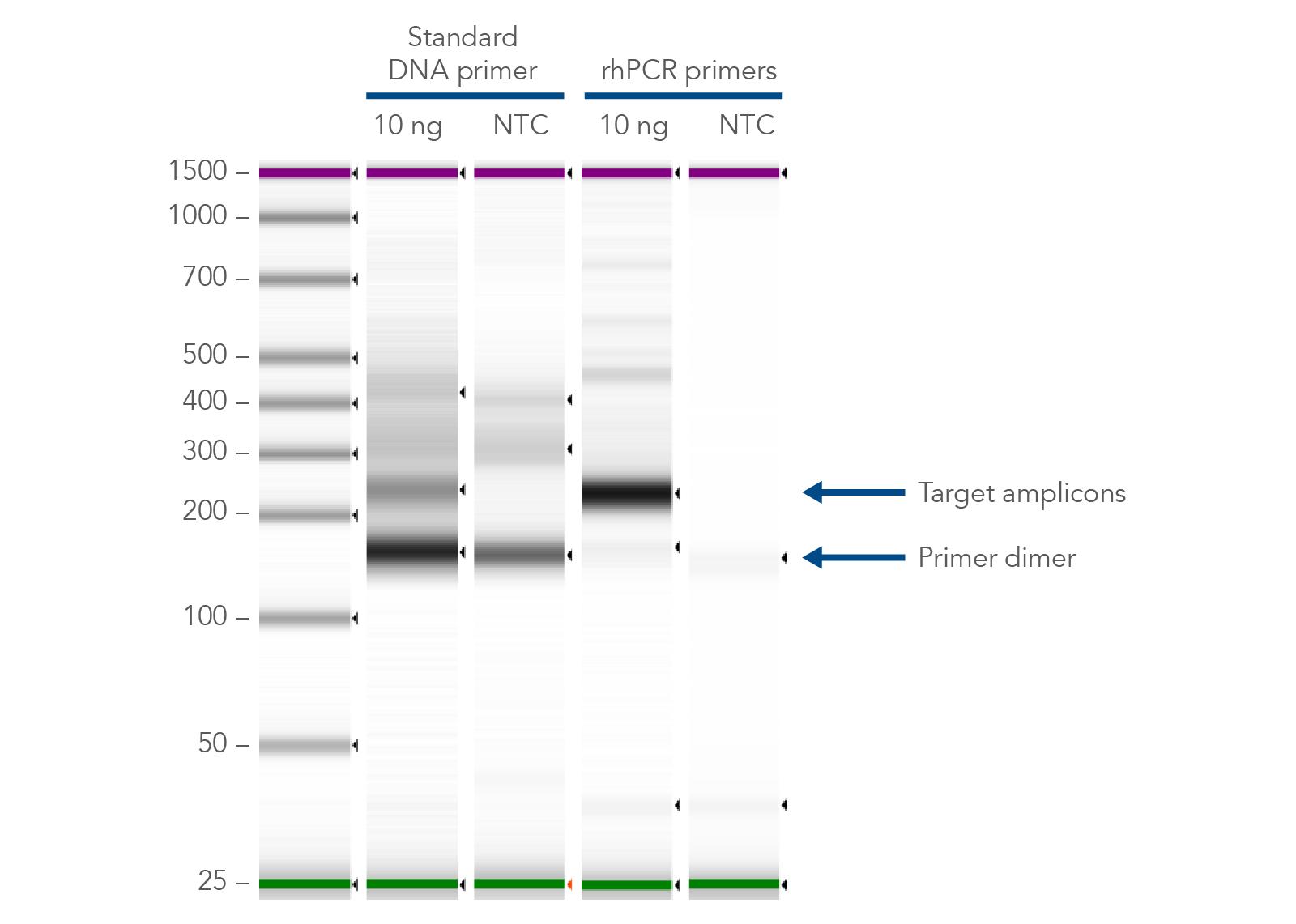 Gel image: minimize primer dimers with rhAmp PCR