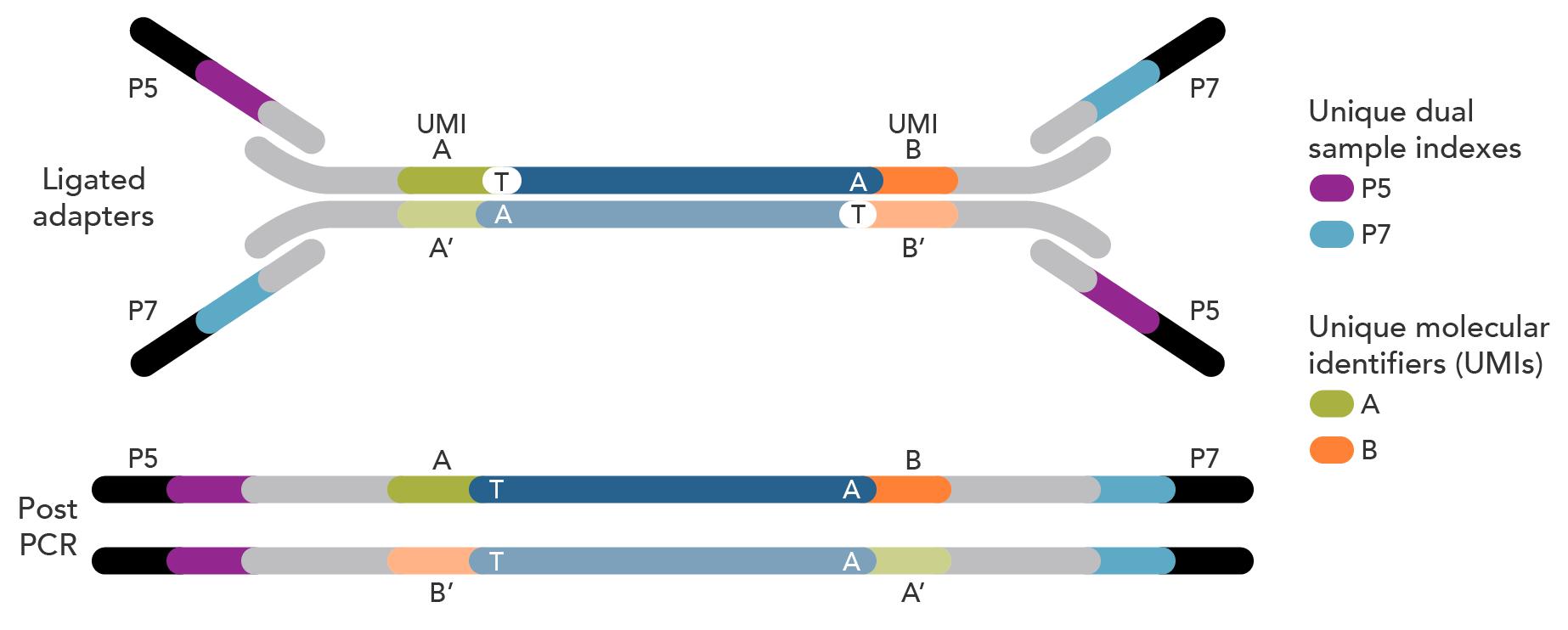 xGen Dual Index UMI Adapter