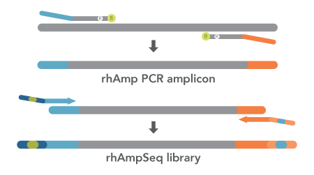 rhAmpSeq_workflow_home_450x250