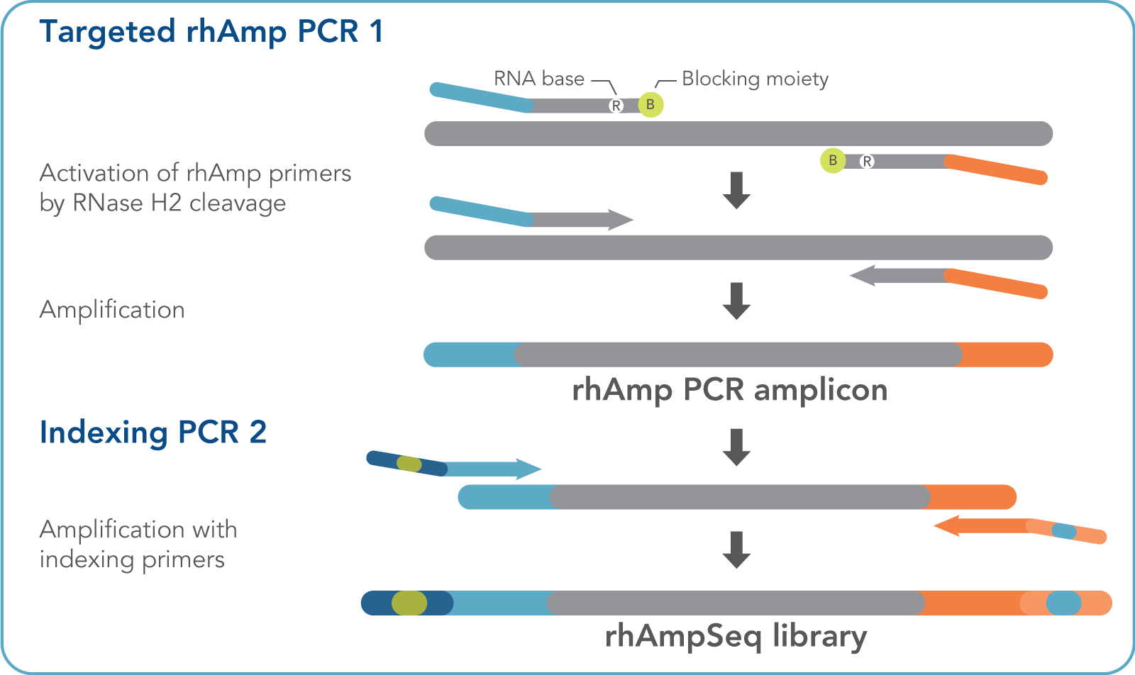 rhAmpSeq Amplicon Sequencing System Standard Workflow